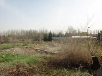 Бишкек. Зеленое прошлое, печальное настоящее