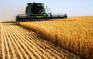 ФАО вложит в сельское хозяйство Кыргызстана $50 млн