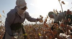 Опасны ли китайские пестициды таджикской земле