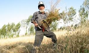 Изменение климата ведет к сокращению вегетационного периода в Центральной Азии